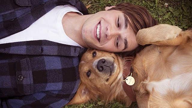 《一条狗的使命》相遇都是久别重逢