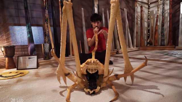 脑洞创意:日本音乐家用螃蟹做乐器