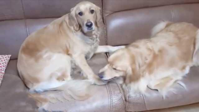 太暖心!狗狗给生病的妹妹拿吃的