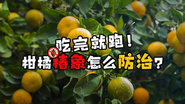 柑橘枝梢莫名枯萎,有可能是它干的