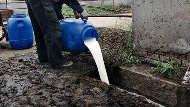 为什么美国人要把牛奶倒进河里?