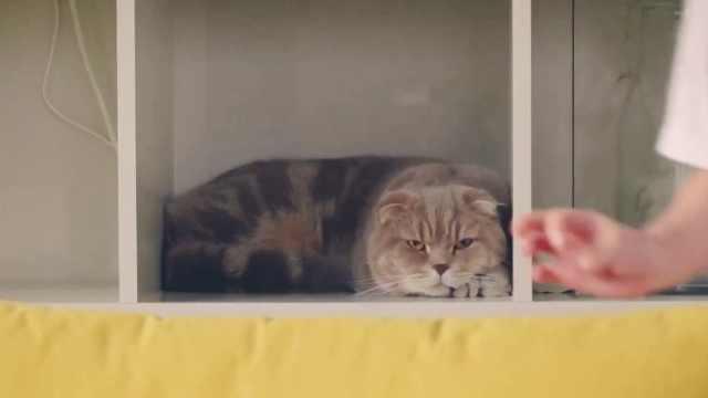 放假小孩的兴高采烈:猫咪一脸冷漠