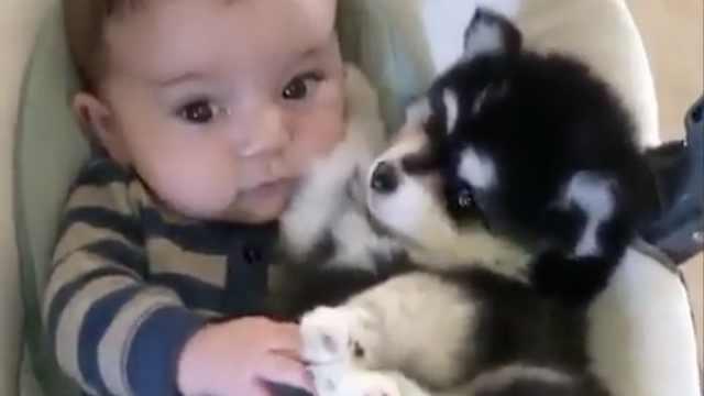 长睫毛宝宝和奶狗,俩小可爱共睡觉