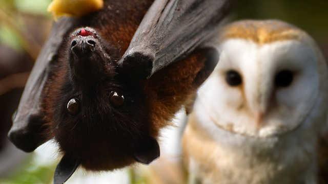 这妹子口味有点重,夸蝙蝠最可爱!