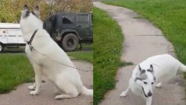 和主人久别重逢,狗狗激动直转圈圈