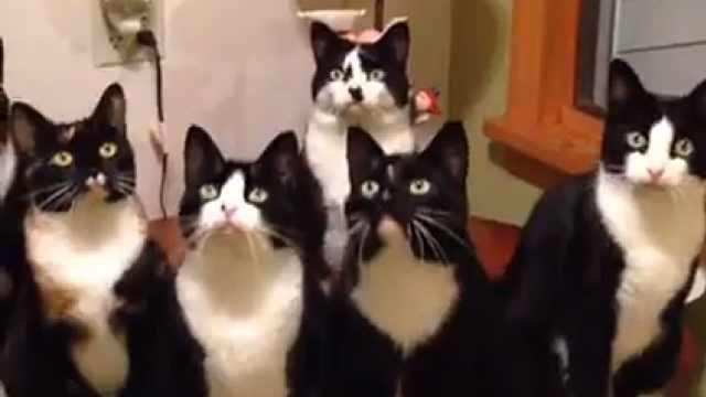 突然被吓到的猫咪们,反应太可爱