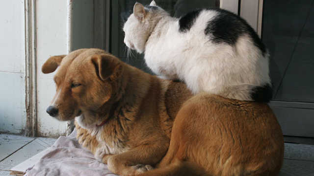 猫咪流产后,狗狗为什么要蹦蹦跳跳