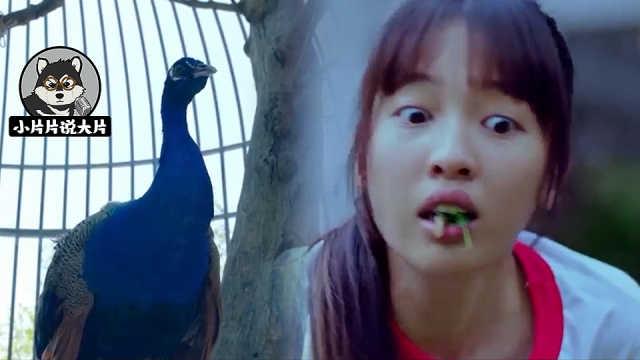 学校养了只孔雀,居然还能许愿?