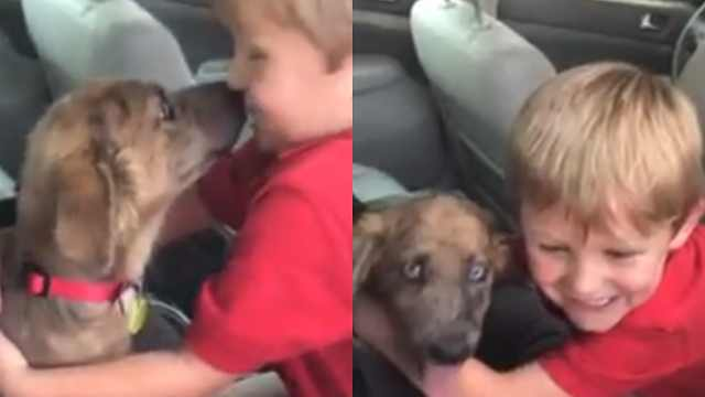 小男孩收到小奶狗,亲亲抱抱太开心