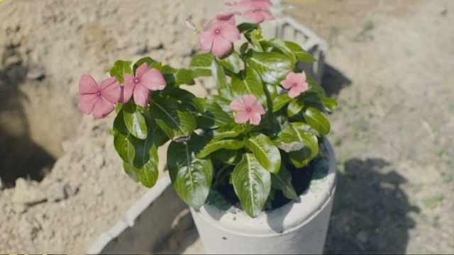植物葬礼:我的孩子像鲜花一样重生