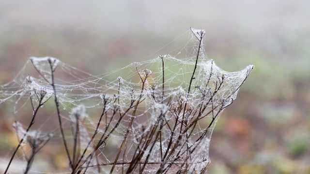 你永远也想不到的蜘蛛丝制衣秘密