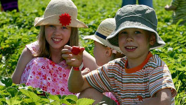 教会孩子责任感:小学生变身农场主
