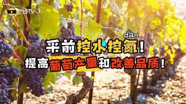 采前控水控氮提高葡萄产量改善品质