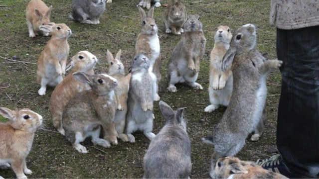 澳大利亚的兔子,到底有多猖狂?