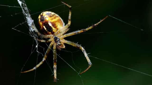 蜘蛛的液压腿,是怎么一回事?