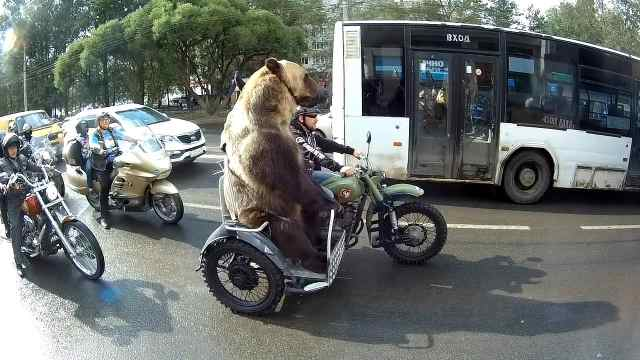 熊在俄罗斯的尴尬地位,被当成宠物