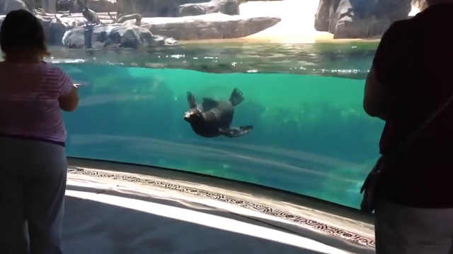 海狮:你怎么样?没受伤吧?