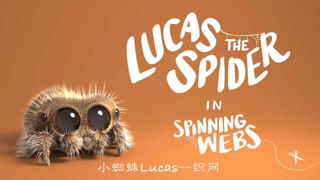 小蜘蛛Lucas的最新一期:织网