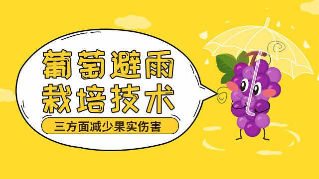 掌握葡萄避雨栽培技术减少果实伤害
