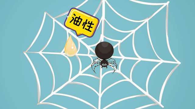 为什么蜘蛛不会被自己的网黏住?