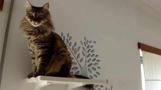铲屎官必看:怎么给喵做一颗猫猫树