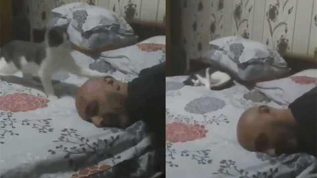 猫打扰主人睡觉,被发现后假装睡着