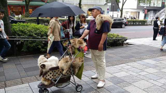 大爷带着猫咪环游日本,满满都是爱