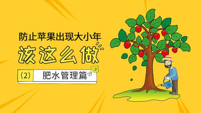 预防苹果大小年,肥水管理很关键