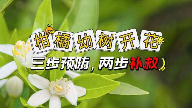柑橘幼树开花三步预防两步补救