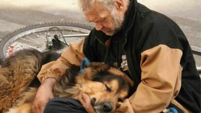 为什么狗狗离世后有人不想再养狗?