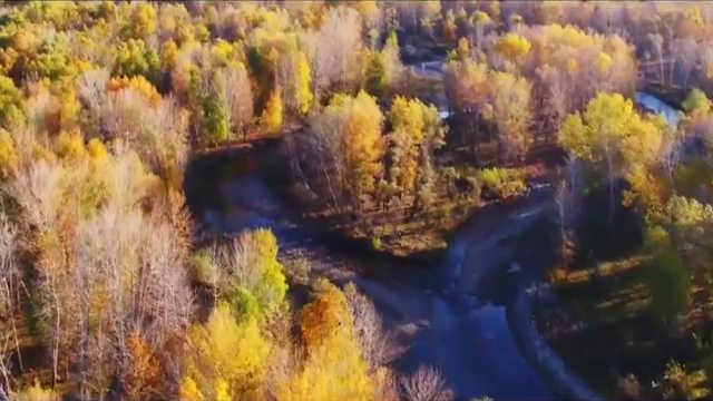 新疆金秋的白桦林,像打翻了调色盘