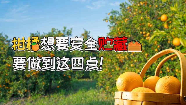 做好柑橘安全贮藏分批上市价格好