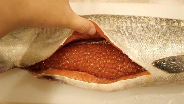 小哥料理巨大三文鱼,肚里好多鱼子