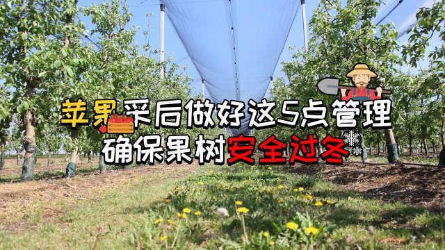 苹果采后恰当管理确保果树安全过冬