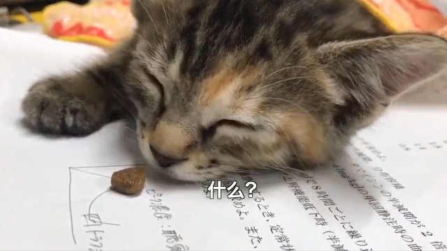 如何唤醒一只睡觉的小猫咪