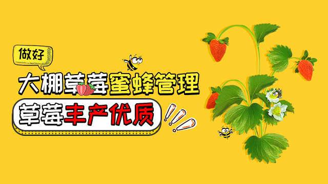 大棚草莓蜜蜂管理技术