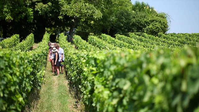 最牛葡萄酒产地,11万公顷葡萄园