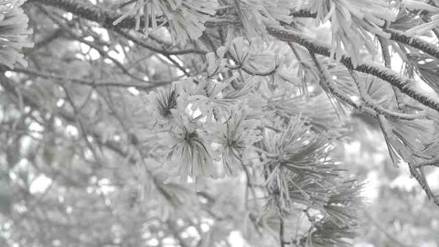 福建多地迎来今冬首雪,雾凇超壮观