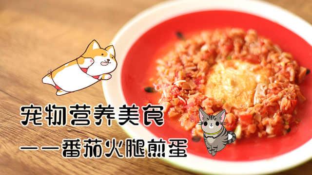 萌宠厨房DIY:番茄火腿煎蛋