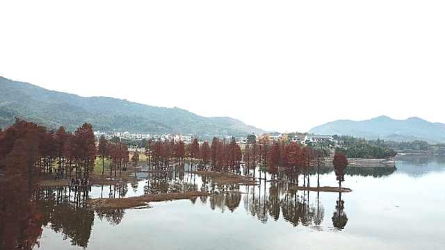 周末游:那一片红衫林,余姚四明湖