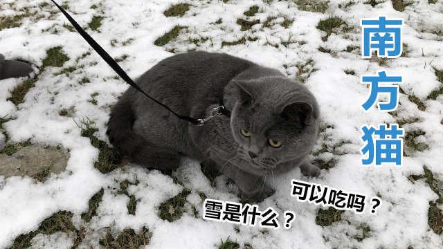 南方人带着猫第一次去玩雪,疯了?