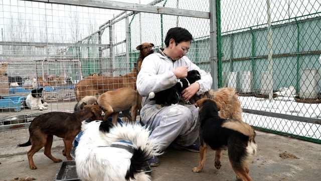 46岁的周予松,10年救了4000条狗