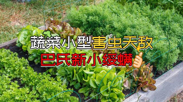 蔬菜小型害虫天敌:巴氏新小绥螨