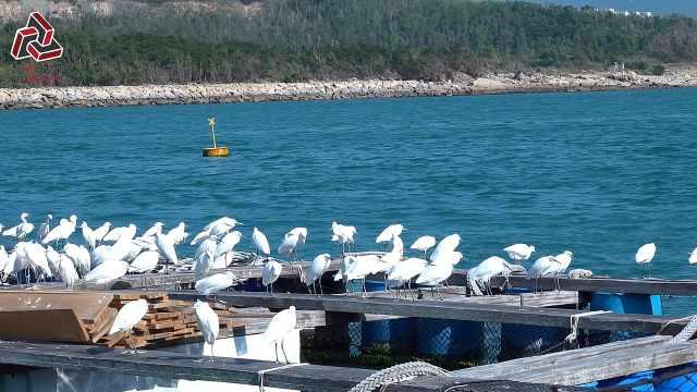 感受南丫岛渔村生活,体验渔民文化
