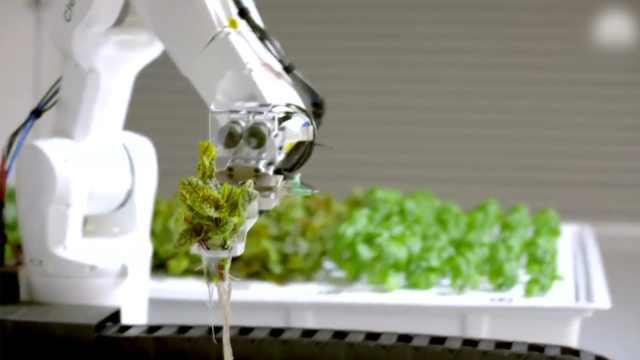 可以替代农民的机器人,真能做到吗
