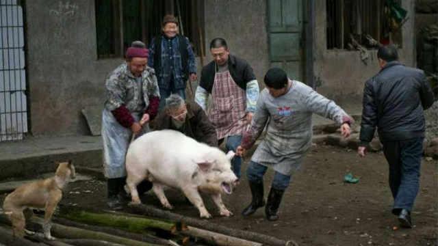 农村过年杀猪有什么讲究?