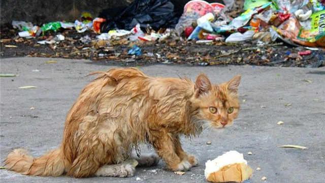 流浪猫被领养后,会有什么心理变化