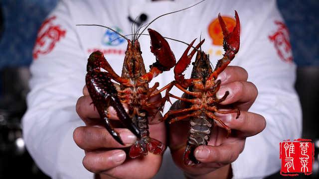 总厨张亮教你辨别公母龙虾