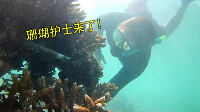 珊瑚护士,保护珊瑚礁,减缓白化