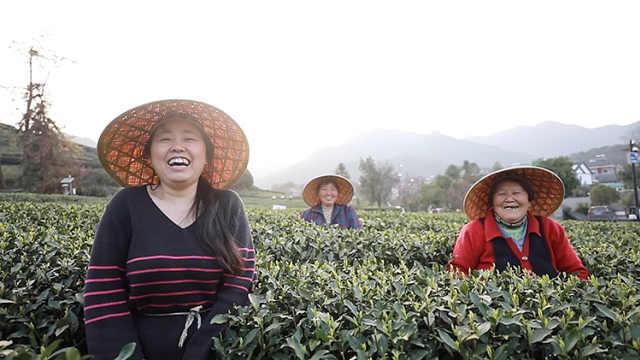 95%年轻人拒绝的工作:采茶候鸟